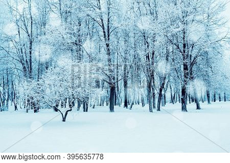 Winter forest landscape, winter forest trees under the snow, winter forest park landscape. Forest winter nature, forest snowy landscape view, winter forest scene