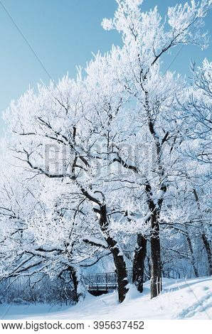 Winter landscape, forest winter trees covered with winter frost and snow in sunny winter day, winter forest landscape. Winter frosty trees in sunny winter day, winter forest landscape
