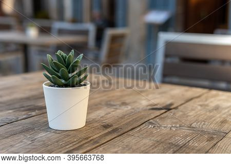 Detail Of A Small Green Leaf Plant Decorating A Cafeteria Terrace Table. Unfocused Background Of A C