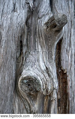 Close Up The Tied Trunk Of A Dead Tree