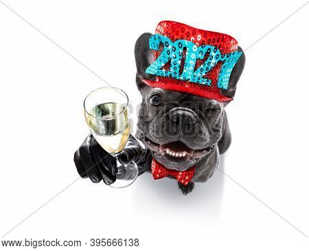French Bulldog Dog Celebrating New Years Eve With Owner And Champagne  Glass Isolated On White Backg