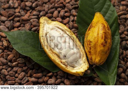 Ripe Cocoa Pod And Cocoa Beans Setup On Cocoa Beans Background.