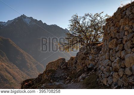 Lonely Tree Grows On Rocky Slope In Cloudy Mountains