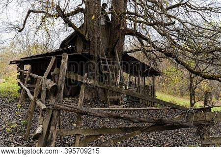 The Old Abandoned Wooden House In The Russian Village Under Old Dry Tree