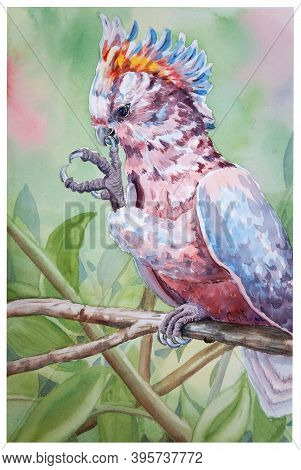 Watercolor Drawing Of An Elegant Inca Cockatoo On A Background Of Green Leaves.