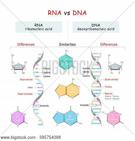 Dna Vs Rna Comparison. Similarities And Differences. Infographic Diagram. Vector Illustration For Ed