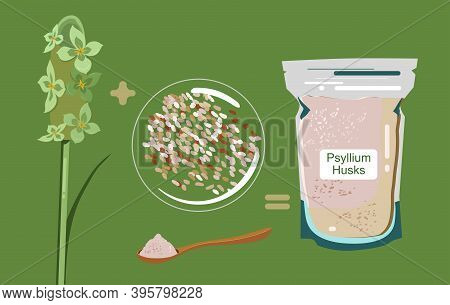 Psyllium Plant,flowers,husks In Packet And Wood Spoon With Powder.ispaghula Seeds And Grain.organic