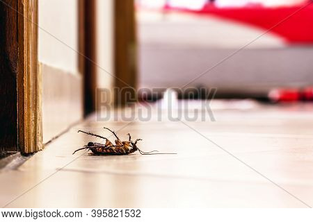 Dead Cockroach Lying On Its Back On The Floor Indoors, Pest Problems And A Need For Detection