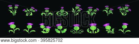 Set Of Scottish Thistles. Cartoon Icon Design Template With Various Models. Modern Vector Illustrati
