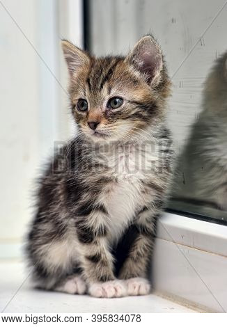 Little Striped With White Kitten And Reflection In Glass