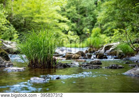 Grasses Grow In Flowing Stream In The Great Smoky Mountains National Park
