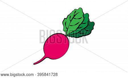 Radish On A White Background, Vector Illustration. Orange Oblong Radish, A Healthy Vegetable For Sal
