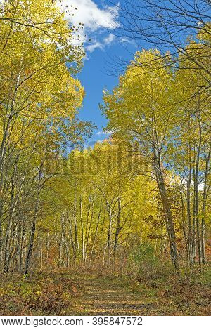 Quiet Path In The Yellow Trees Of Fall In Governor Thompson State Park In Wisconsin