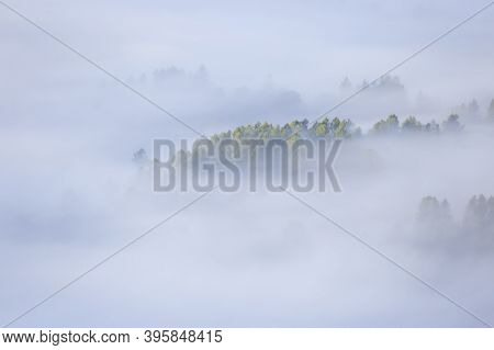 Autumn Inversion With Thick Mist . Coniferous Trees Can Be Seen Between The Mist. Typical Autumn Wea