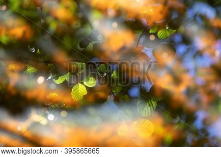 Alnus leaves reflection on water with warm spring sunlight