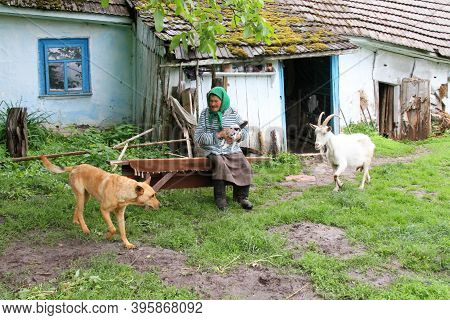 Farmstead, Ukraine - May 27: Elderly Woman Standing In The Barn Door And Looks At Goats On May 27, 2