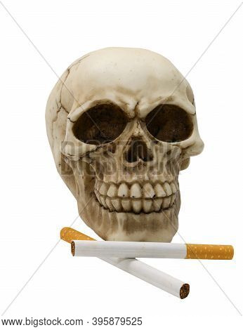 Human Skull With Cigarettes Symbol Of Death Caused By The Habit Of Smoking On A White Background