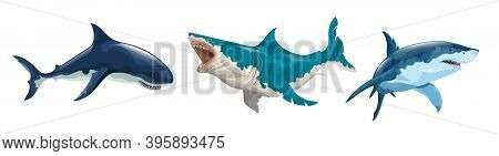 Horizontal Set Of Different Sharks In Vector. Several Sharks In Motion And Different Colors And A Sh