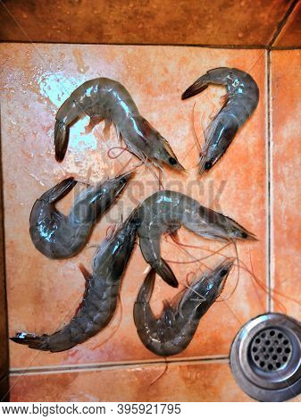 Jumbo Raw Black Tiger Shrimps Or Prawns For Cooking Background