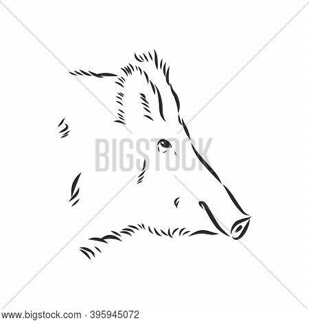 Sketch Grunge Wild Boar In The Profile.stock Vector Illustration., Wild Boar Vector Sketch Illustrat