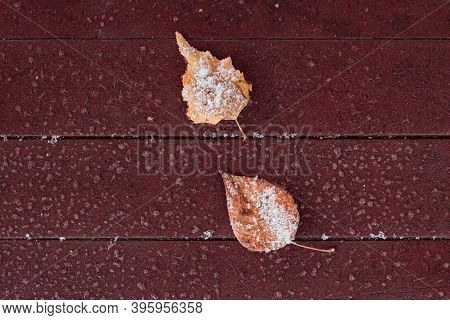Tree Leaf On Snowy Maroon Floor Of Patio Or Terrace, Natural Background Top View With Copy Space, Wi