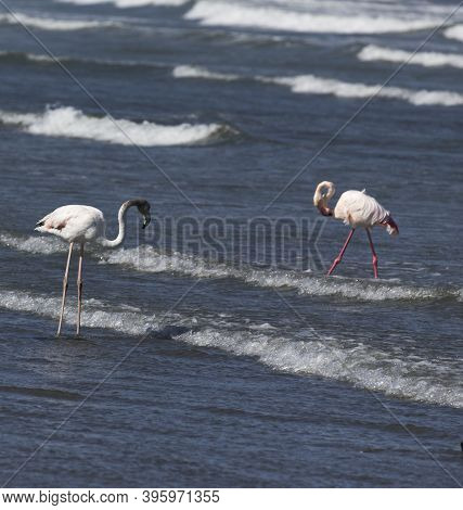 Photo Of Two Pink Flamingo Birds In Namibia