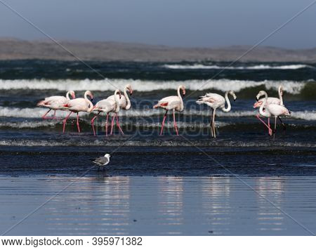 View Of Seagull And Flamingo Birds Out Of Focus, Namibia