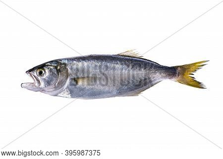 Fresh Fish Isolated On White Background. Fresh Fish!