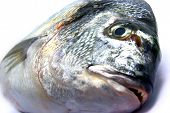 Detail view of a fresh raw sea bream isolated. poster