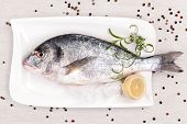 Mediterranean seafood concept. Sea bream on white plate with fresh herbs and colorful peppercorns on white background. Luxurious fish eating. poster