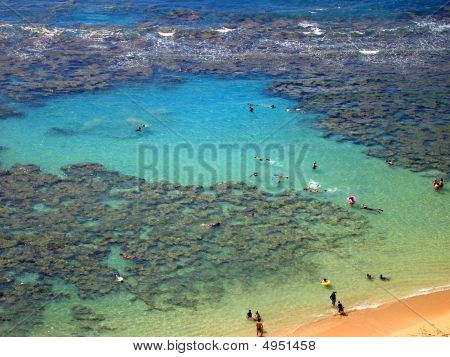Aerial View Of Snorkelers And Families Swimming Around The Coral At Hanauma Bay, Oahu, Hawaii