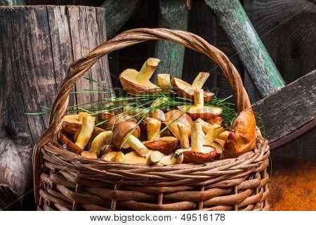 Still Life Of Yellow Boletus Mushrooms