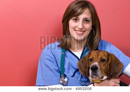 A veterinarian posing with a purebred beagle dog. poster