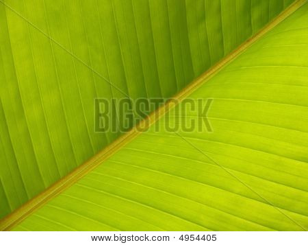Banana Leaf Diagonal Pattern Closeup