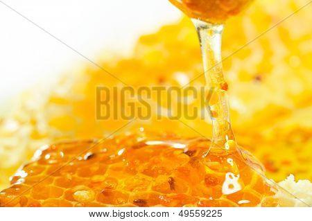 golden honeycomb and pollen