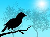 Bird silhouette in a sunny and spring day poster