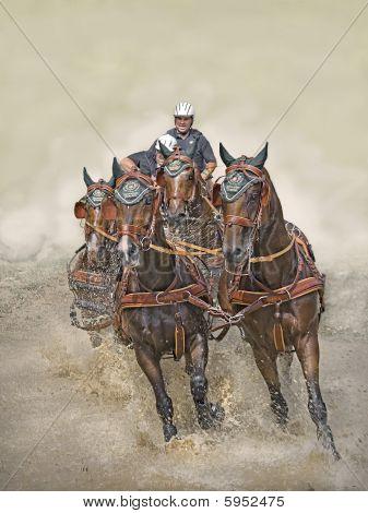 German Derby 2008 for 4 harnessed horses teams