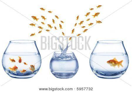 Three Aquaria's And Of Jumping Out Fish