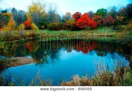 Autumn Foliage On Water