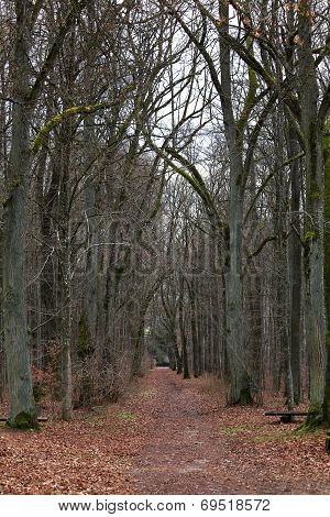 Autumn Avenue In The Forest