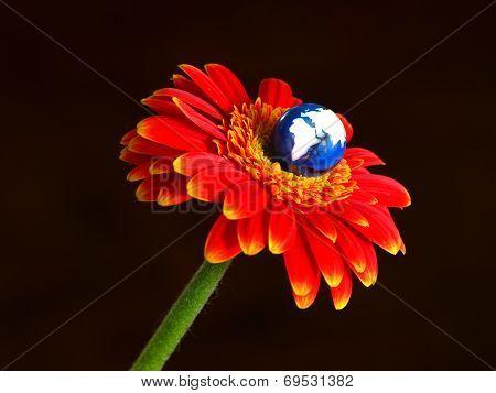 Earth blooming on Gerbera flower