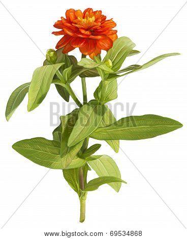 Drawing of orange flower on white background