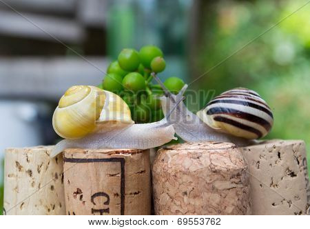 Snails on wine corks in a Summer Garden