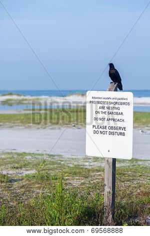 Black Bird Perched On Protected Shorebirds Sign