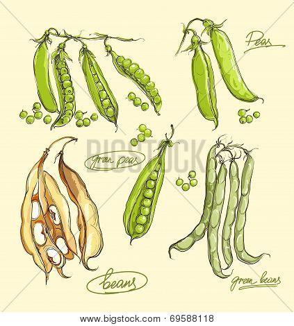Vector Illustration Set Of Green Peas