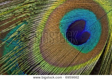 Peacock eye background