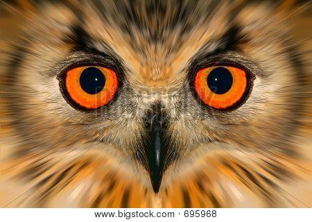 Enhanced Owl Portrait