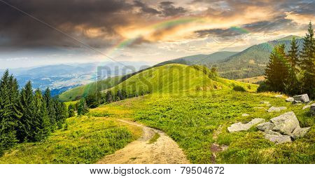 Pine Trees Near Valley In Mountain At Sunrise