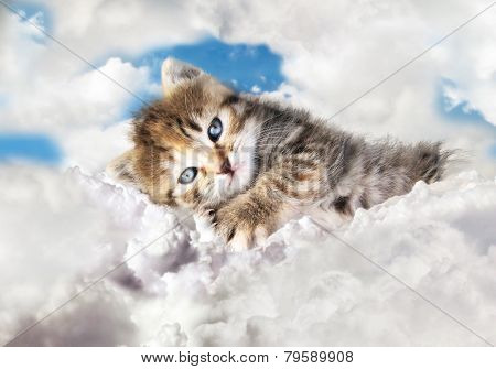 kitty on clouds