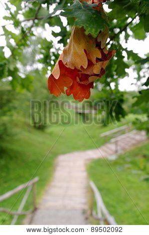 First Sign Of An Autumn